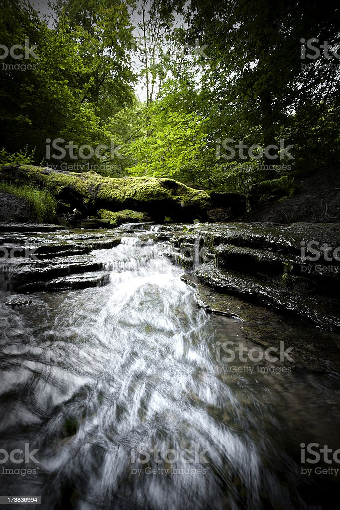 Woodland stream royalty-free stock photo