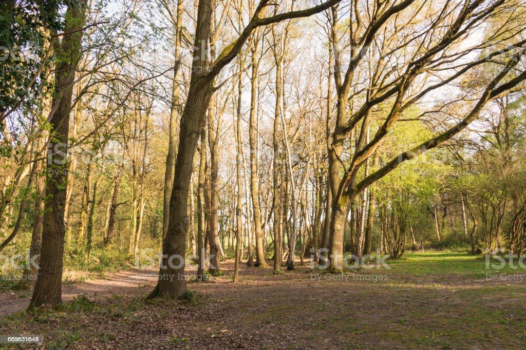Woodland View stock photo