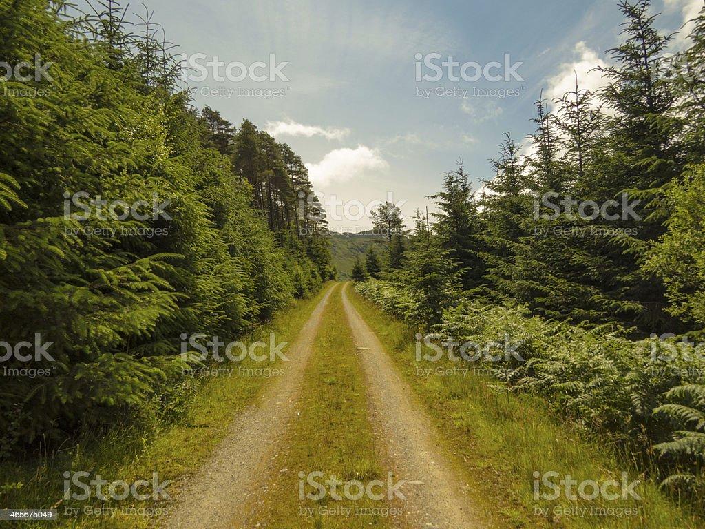 Woodland walk in Summer royalty-free stock photo