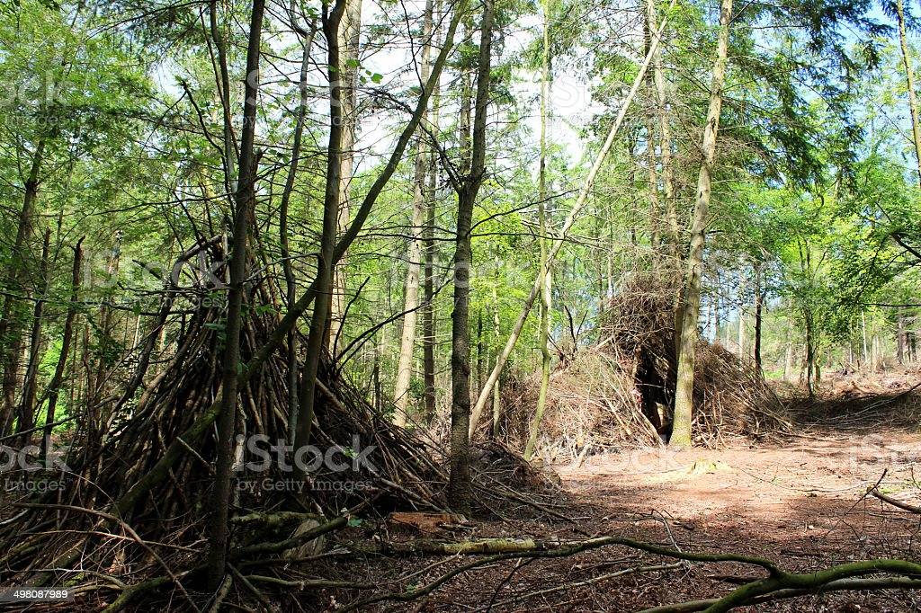 Woodland wigwams made with branches, children's woodland den / camp image stock photo