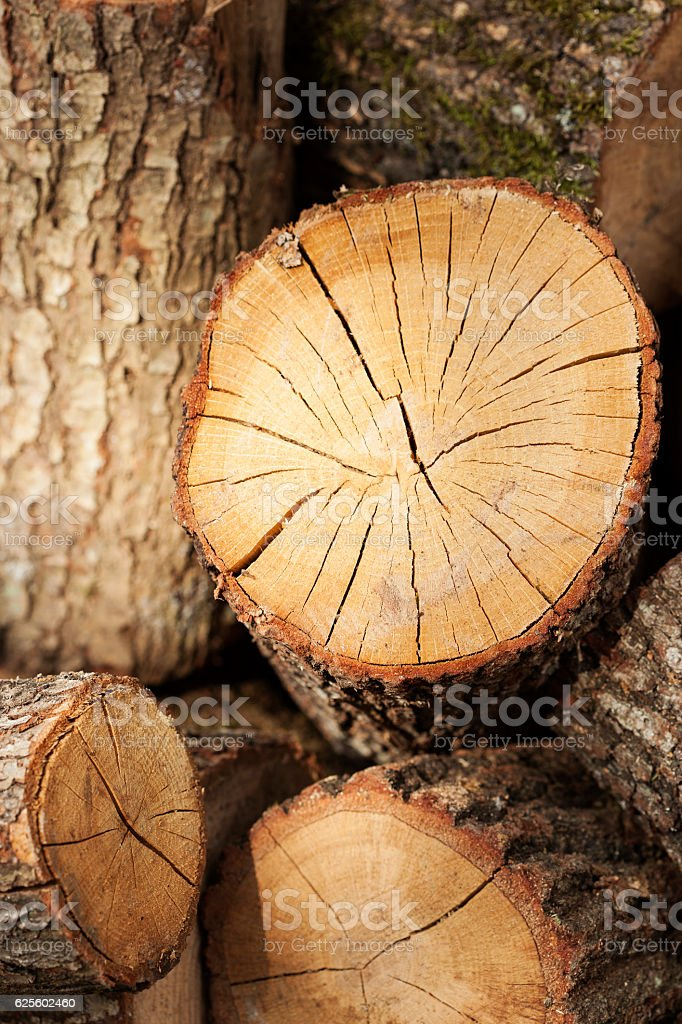 Woodland,Firewood stock photo