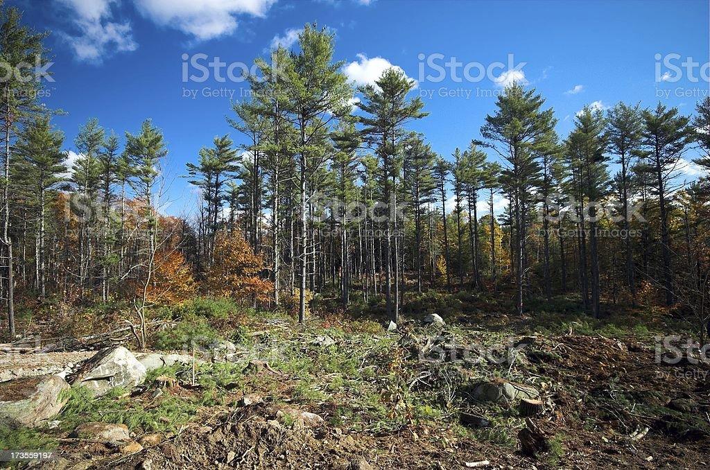 woodlot royalty-free stock photo