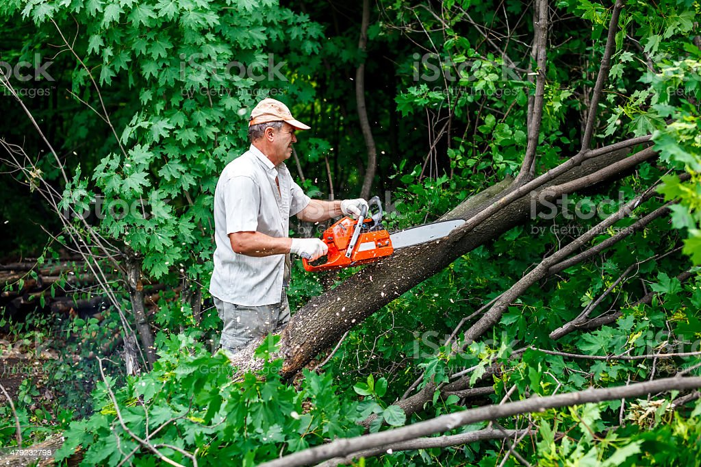 woodman uses his chainsaw cut the tree stock photo