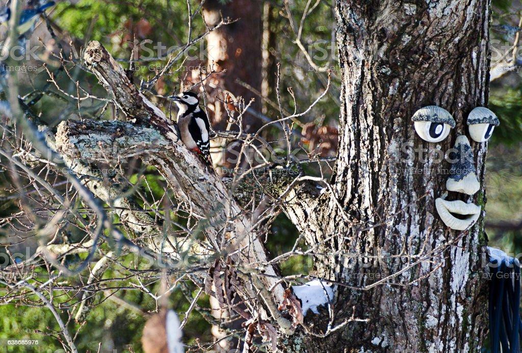 Woodpecker in the tree stock photo