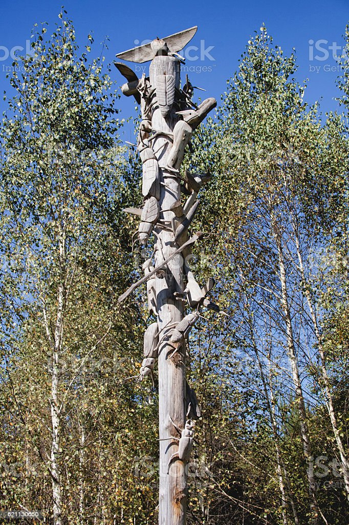 Woodpeckers and weevils battle. NICOLA-LENIVETS. Editorial 19.09 stock photo
