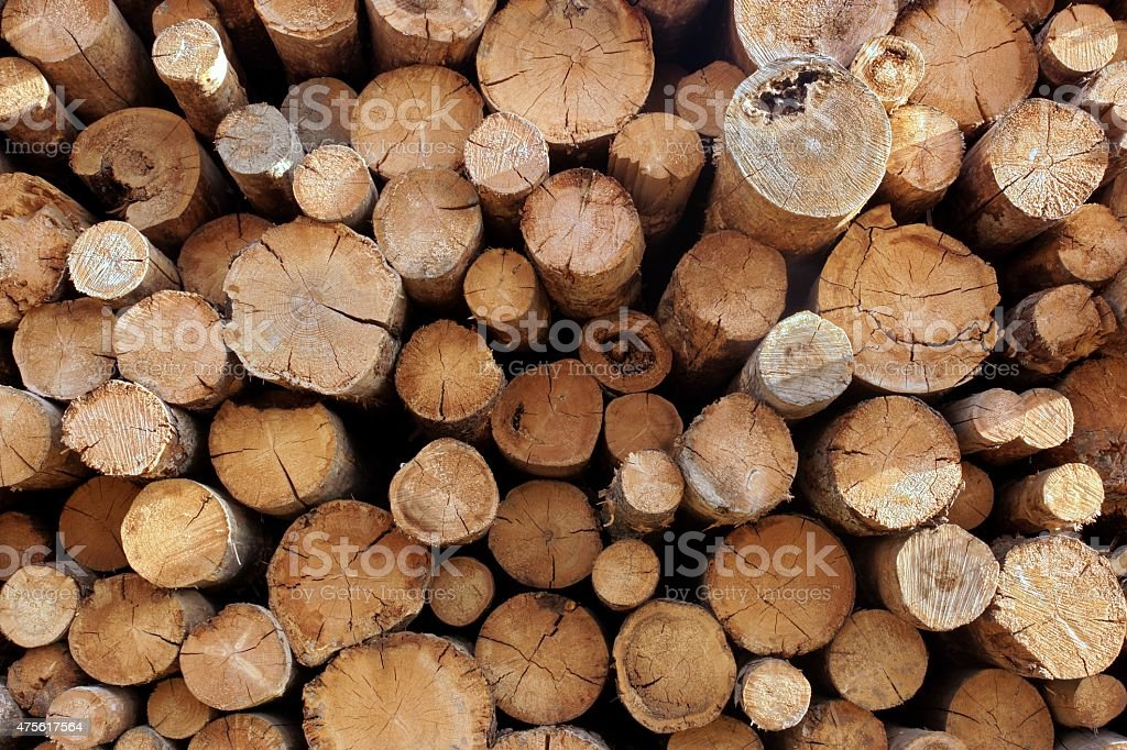Woodpile From Big Logs For Forestry Industry stock photo