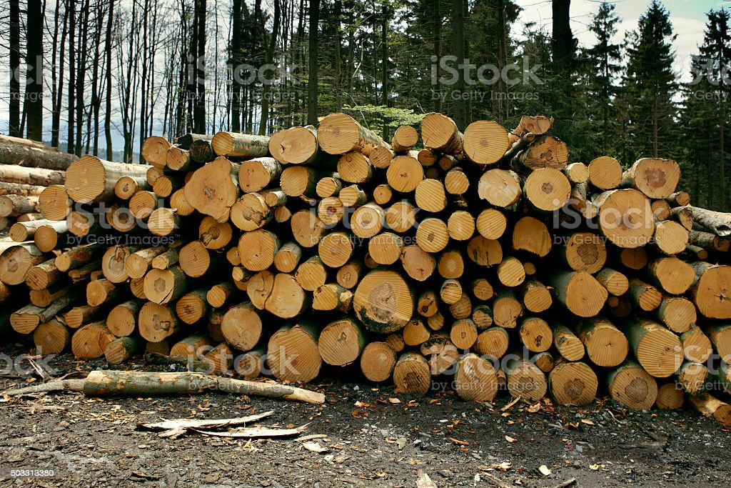 Woodpile in the forest stock photo