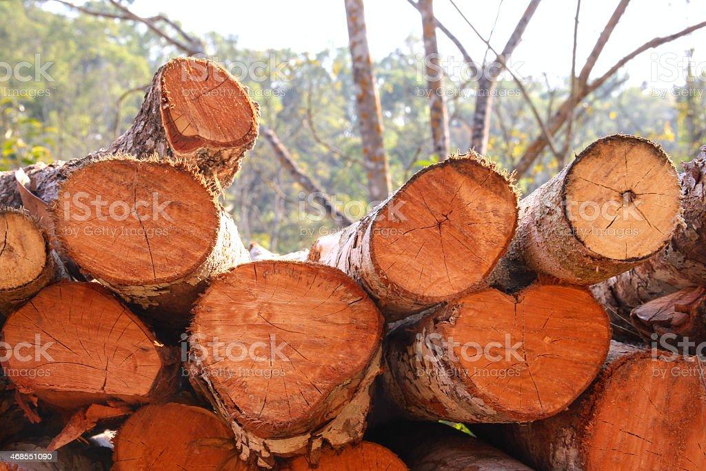 Woodpile texture closeup royalty-free stock photo