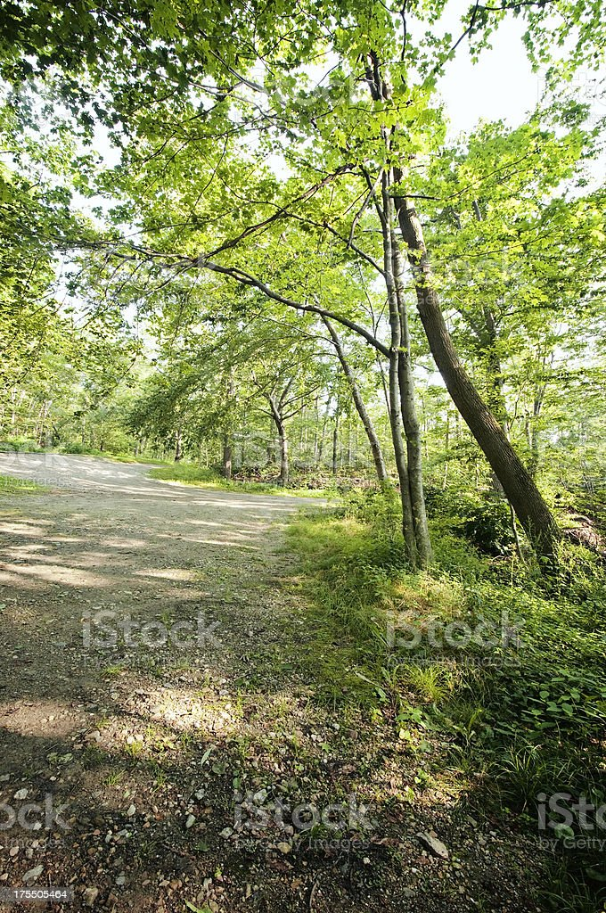 Woods Background royalty-free stock photo
