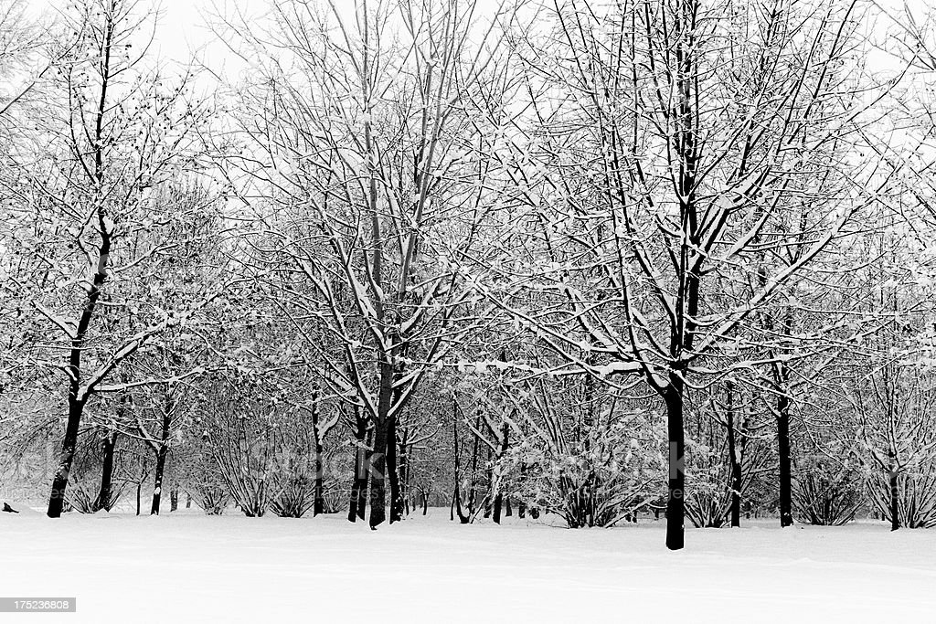Woods. Black and White royalty-free stock photo