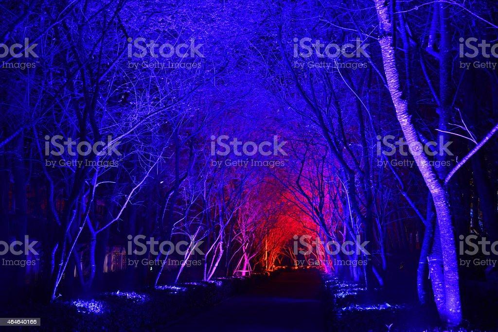 Woods changable night scenery stock photo