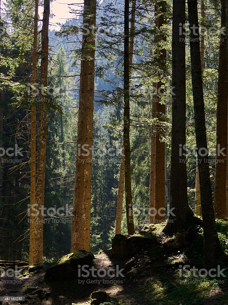 Woods. Color Iamge stock photo