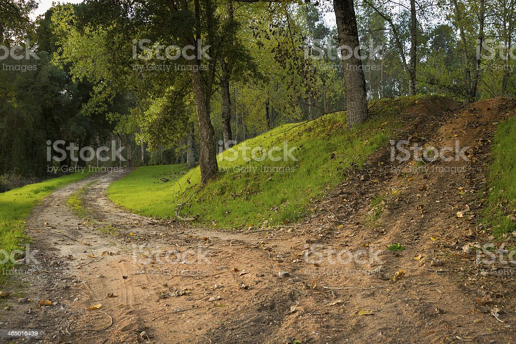 Woods Dusty Road stock photo