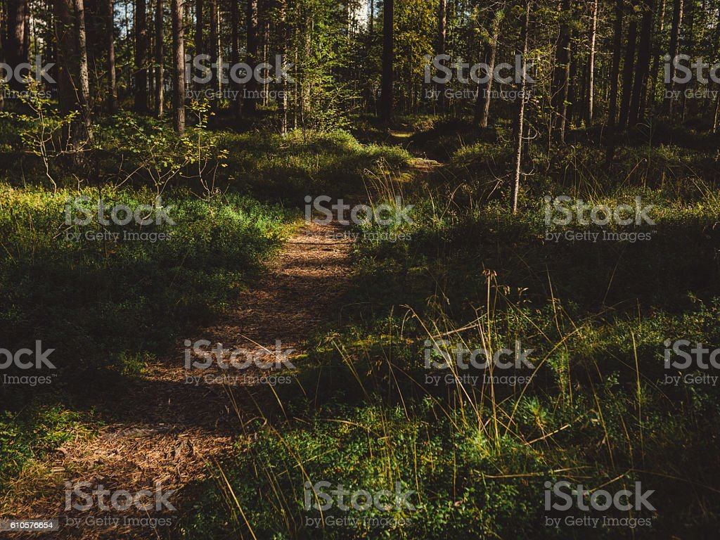 Woods forest path in Finland stock photo