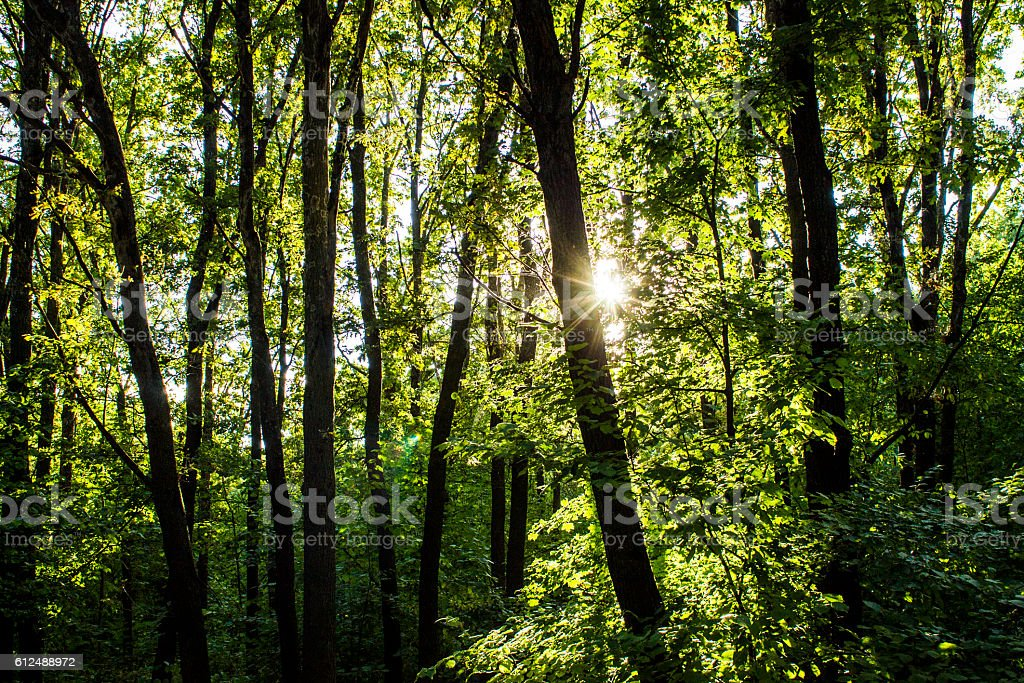 woods forest. trees background. green nature landscape. wilderness stock photo