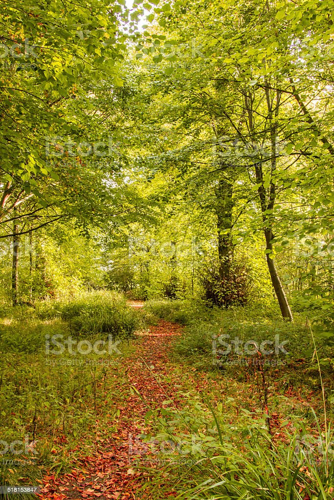 Woods in the fall stock photo