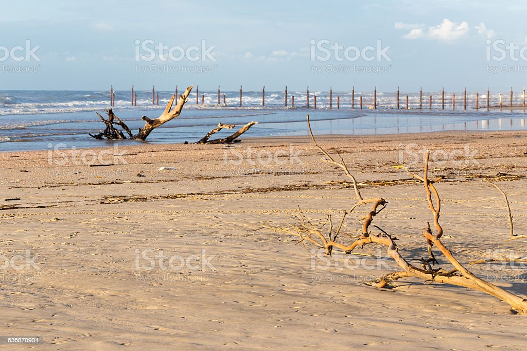 Woods logs branch sea shore beach ocean pollution environment disaster. stock photo