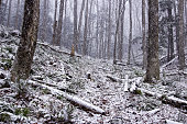 Woods on a Snowy Day