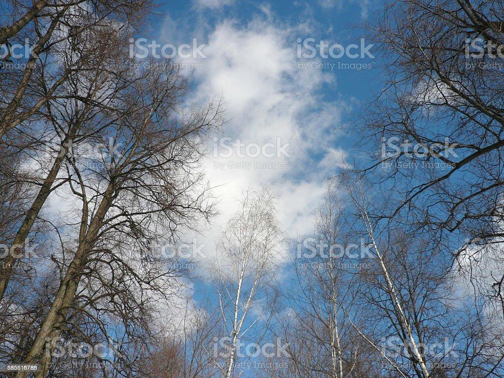 woods on blue sky stock photo