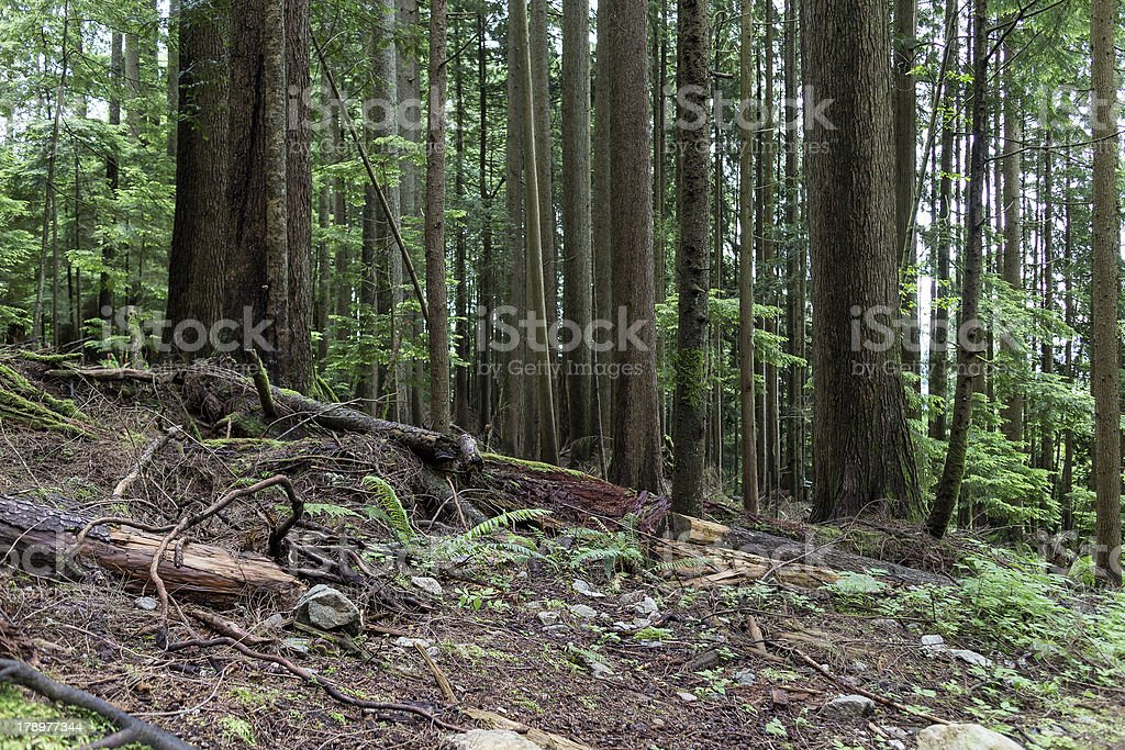 woods on grouse mountain royalty-free stock photo