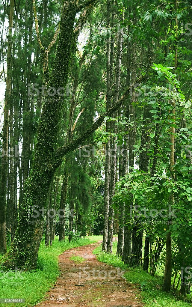 Woods road royalty-free stock photo