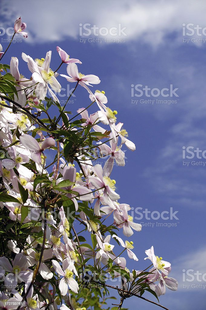 Woods shoot flowers in front of a blue sky royalty-free stock photo
