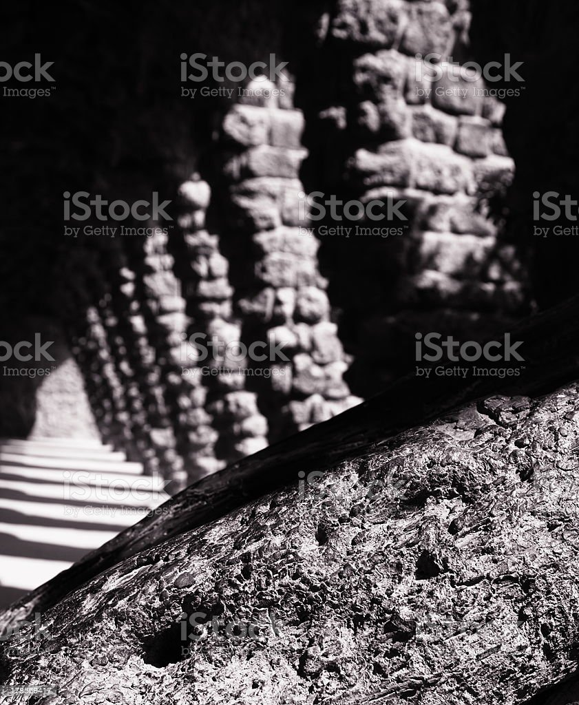 woods trapped in shade and sun stock photo