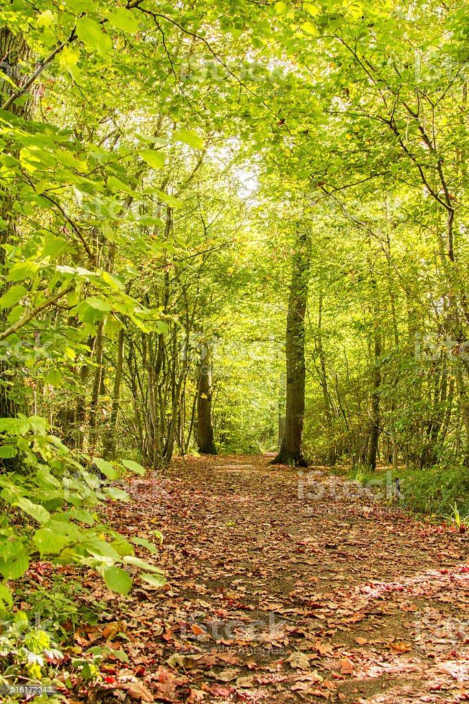 Woods walk stock photo