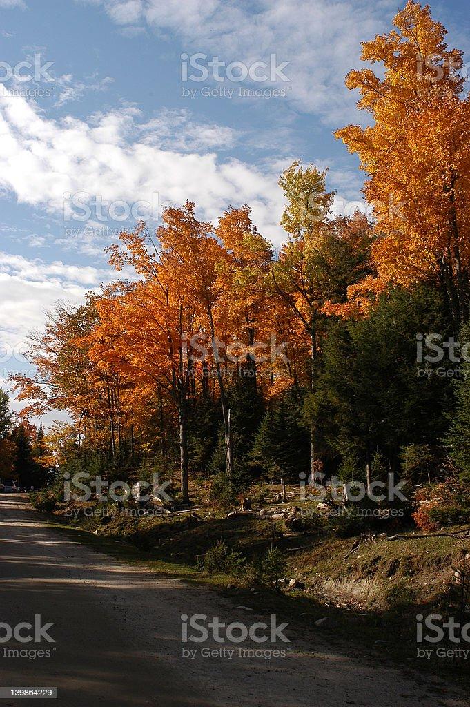 Woods_51 royalty-free stock photo