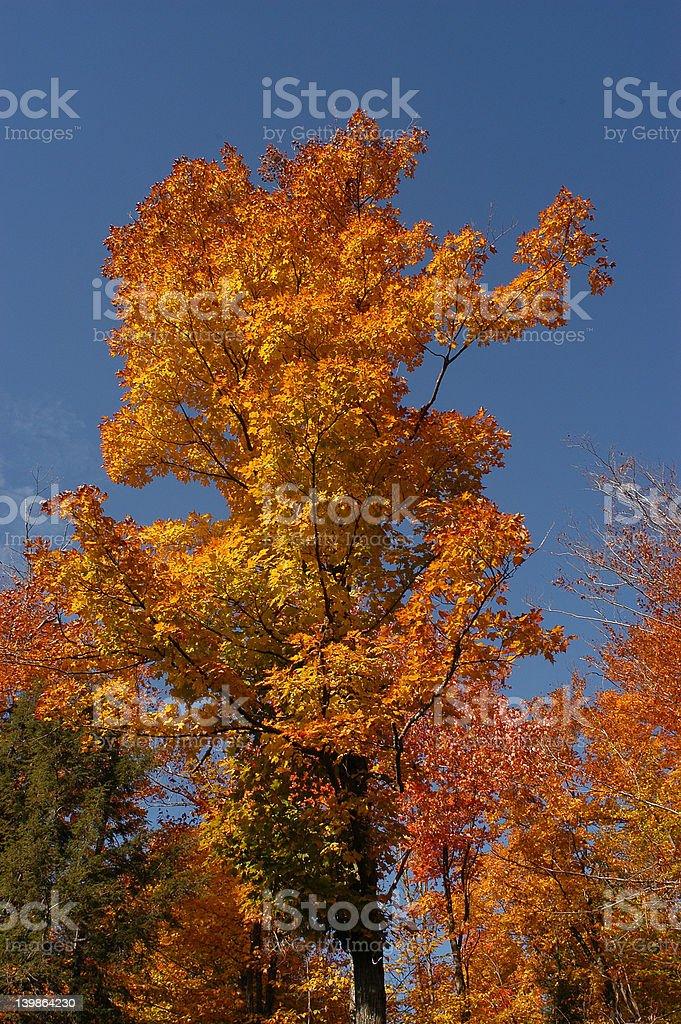 Woods_53 royalty-free stock photo