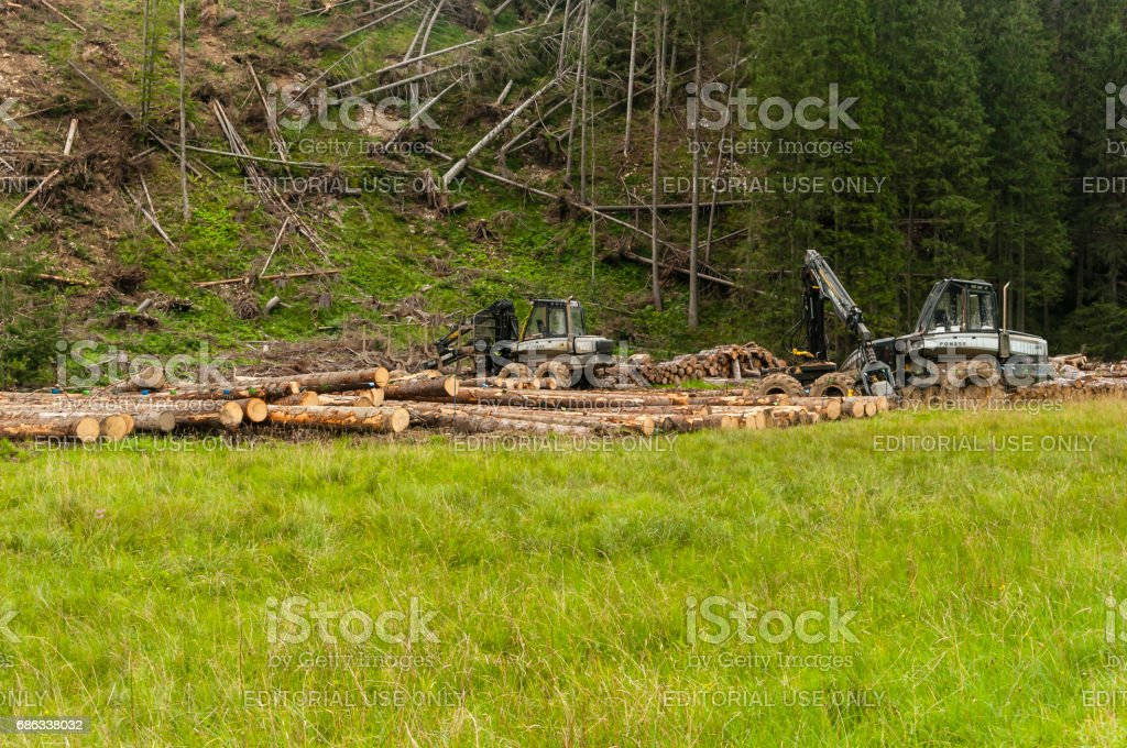 Woodworking machines for woodcutting. stock photo