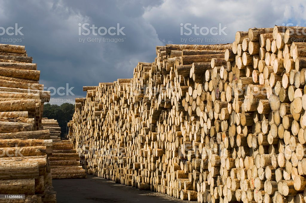Woodworking - yard of timber stock photo