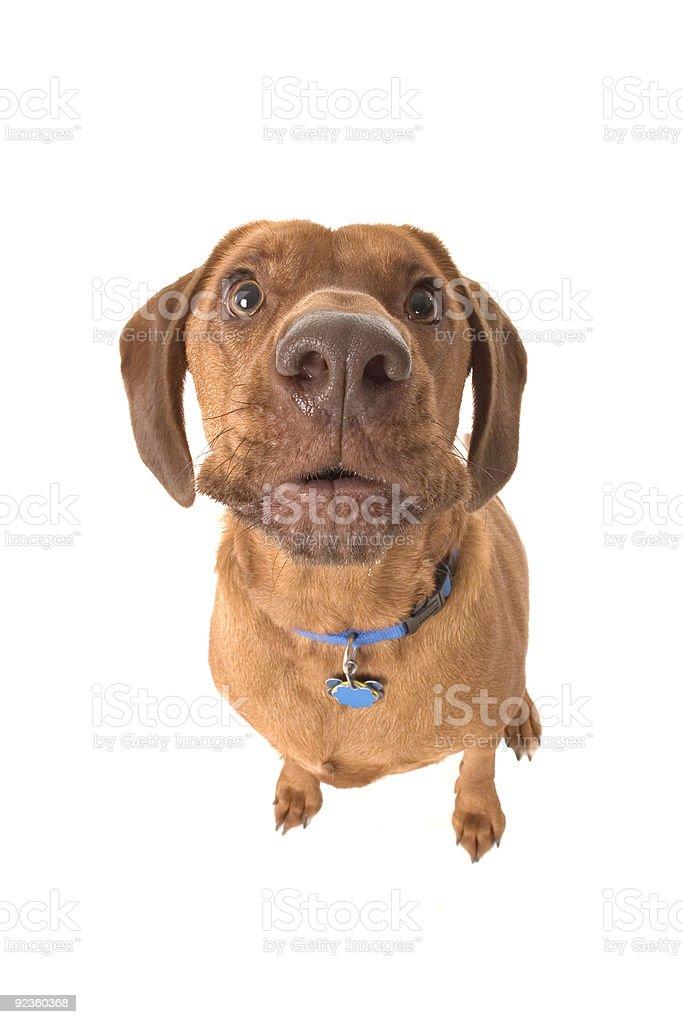 Woof stock photo