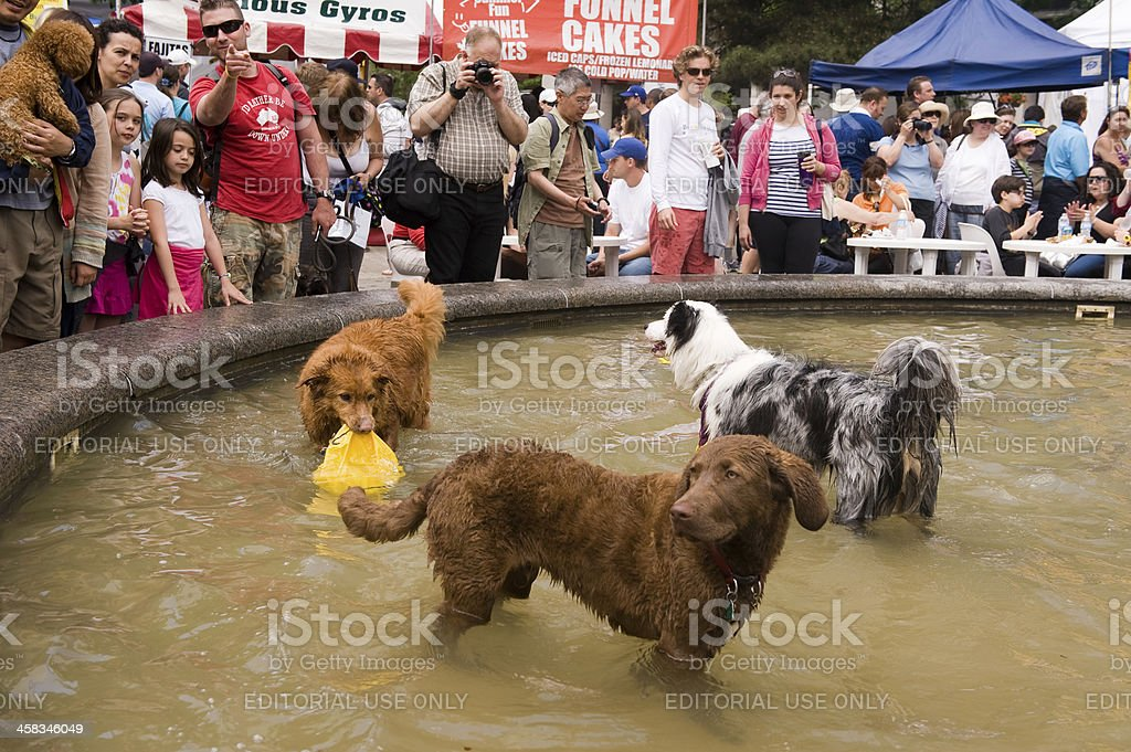 Woofstock festival in Toronto royalty-free stock photo