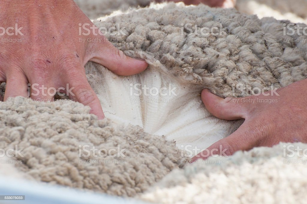 Wool Classing in Australia. stock photo