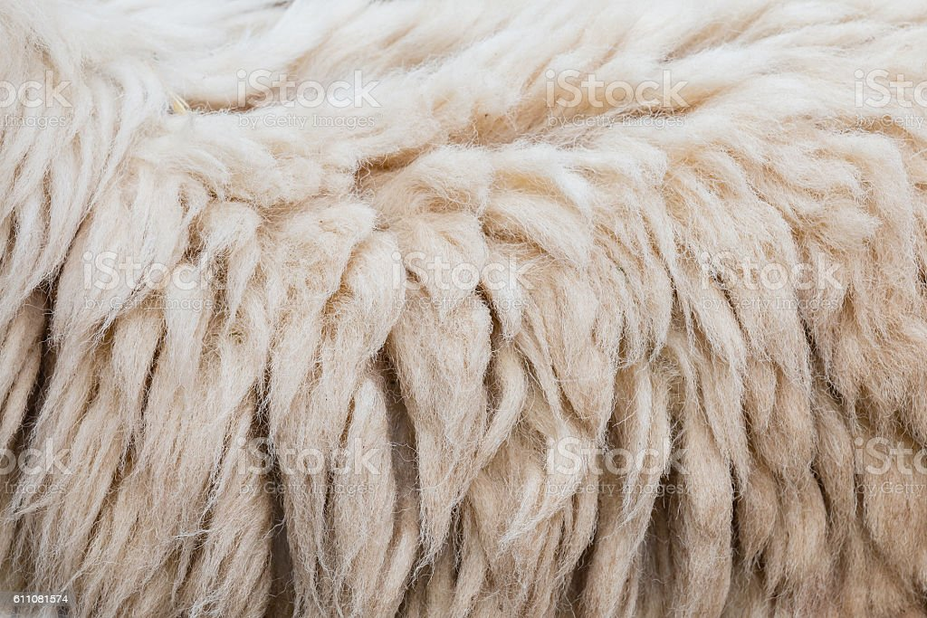 Wool of sheep background stock photo