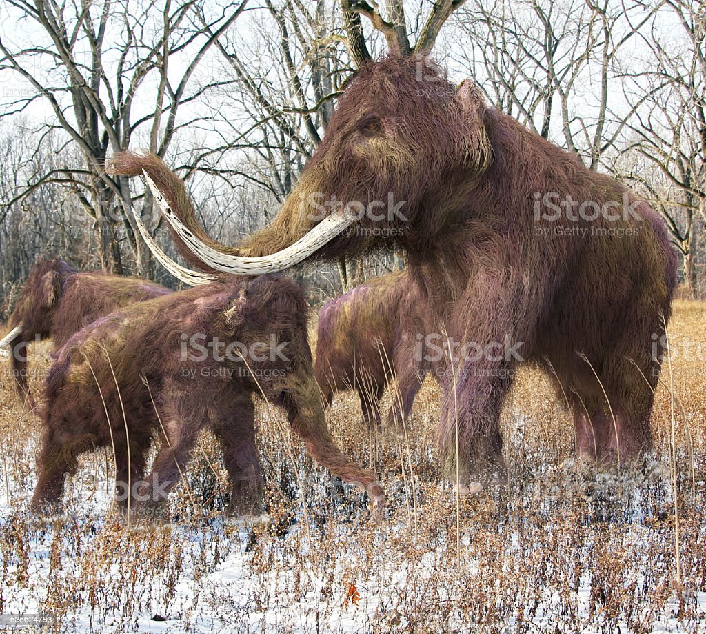 Woolly Mammoth Family In Forest stock photo
