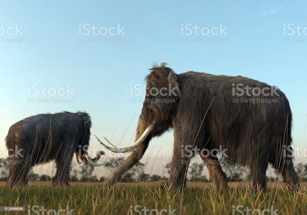 Woolly Mammoths In The Morning Sun stock photo