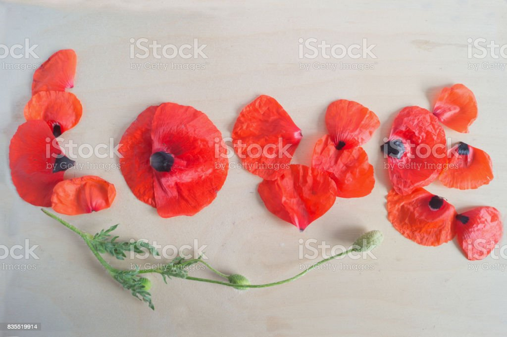 Word Love made from petals of poppies, stem with bud on the white background stock photo