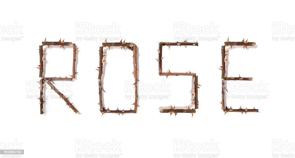 word rose made up of thorny rose stems stock photo