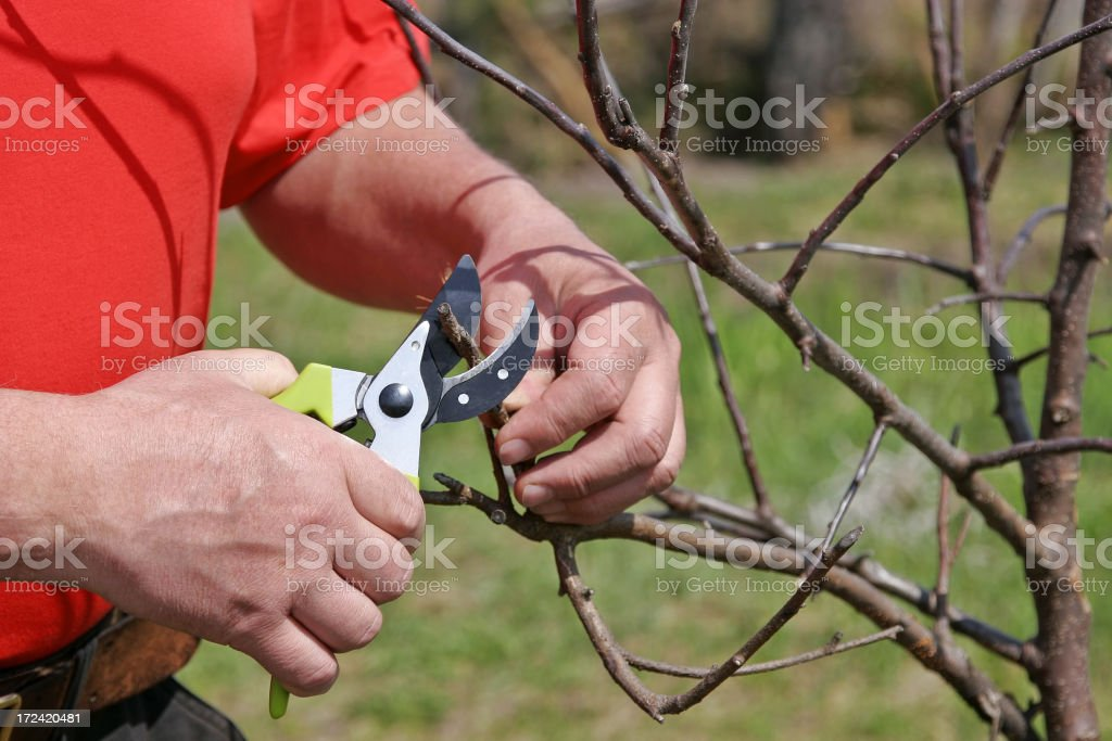 Work in a garden royalty-free stock photo