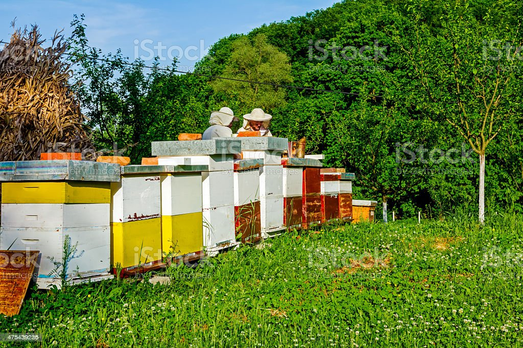Work in apiary stock photo