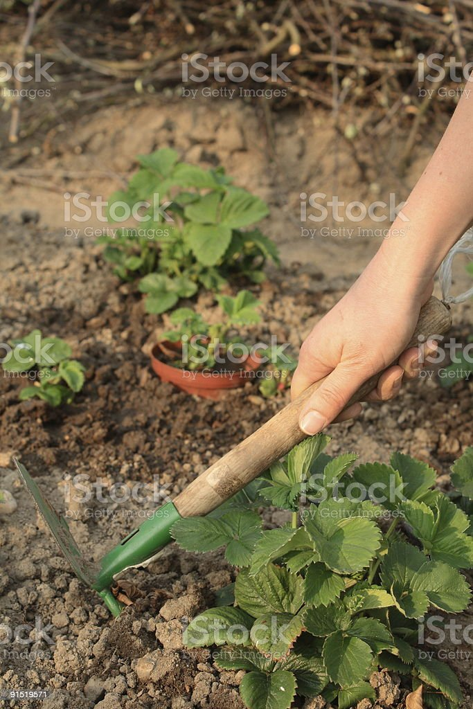 Work in garden royalty-free stock photo