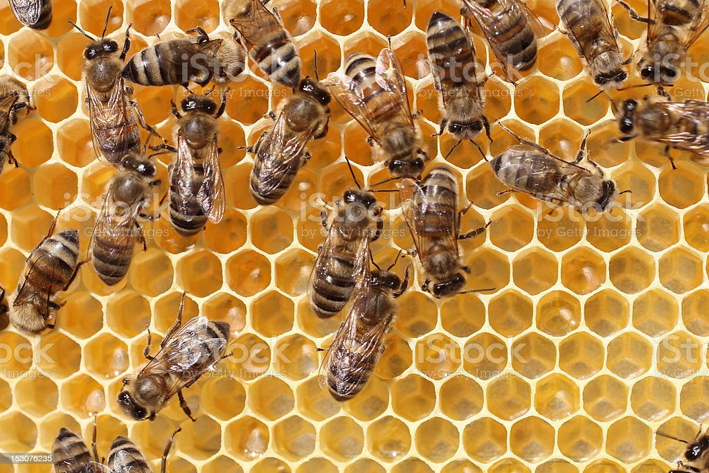 Work of the bees in hive royalty-free stock photo