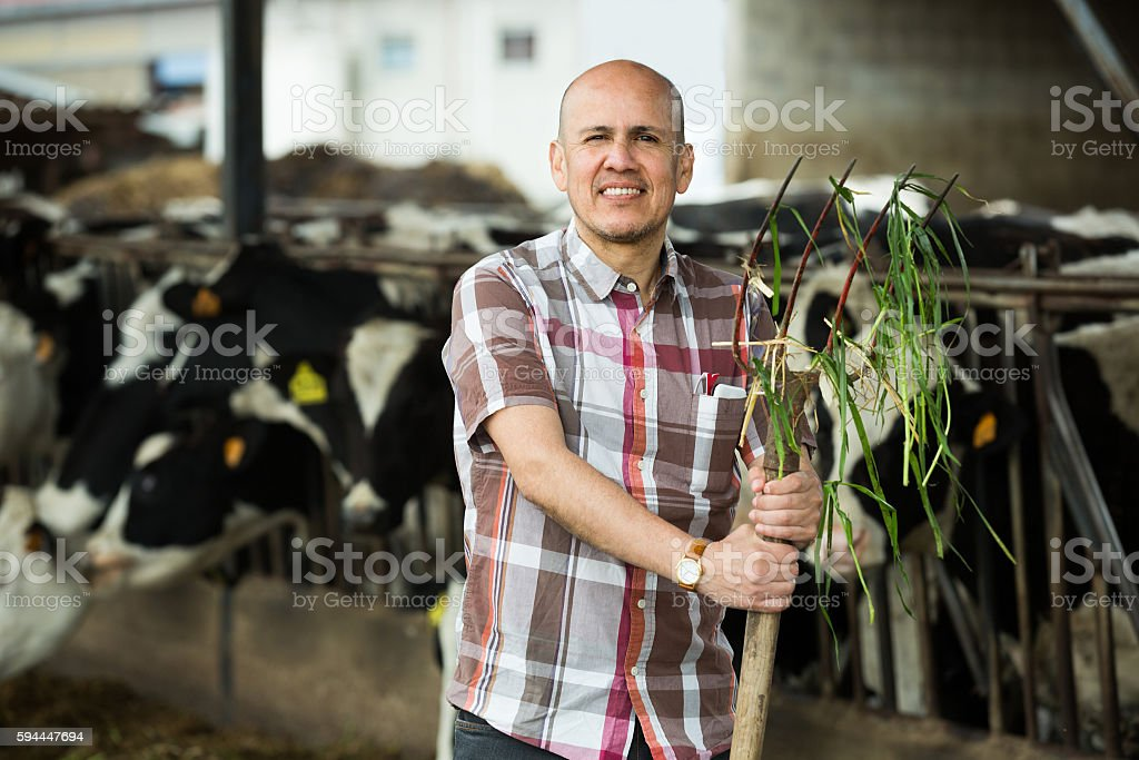 worker collecting grass stock photo