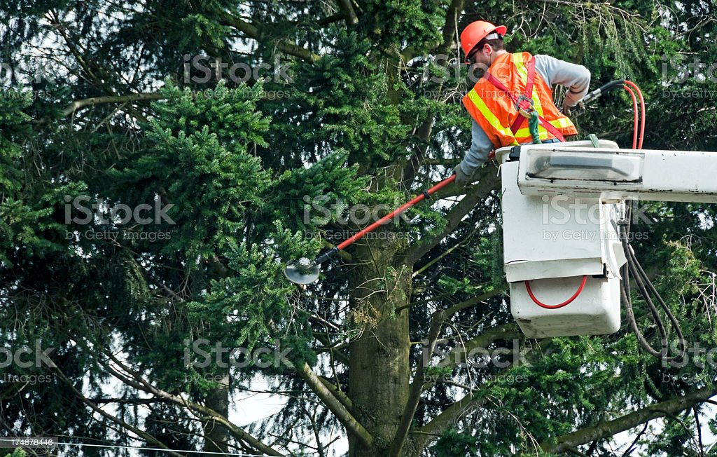 Worker in a bucket truck trimming tree branches around lines stock photo