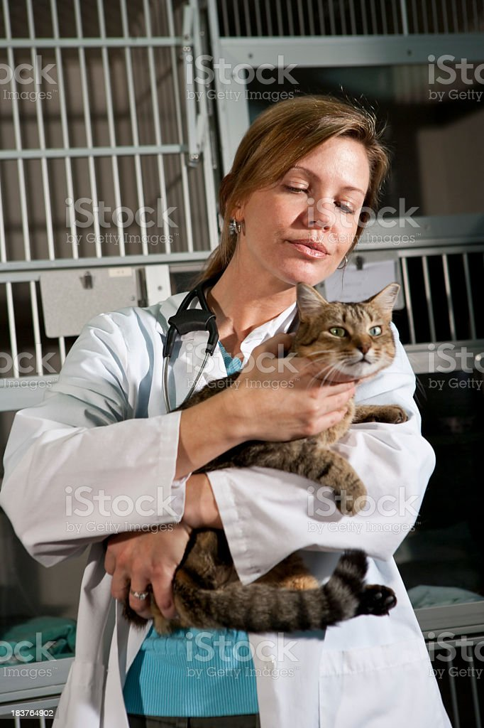 Worker in animal clinic holding cat stock photo