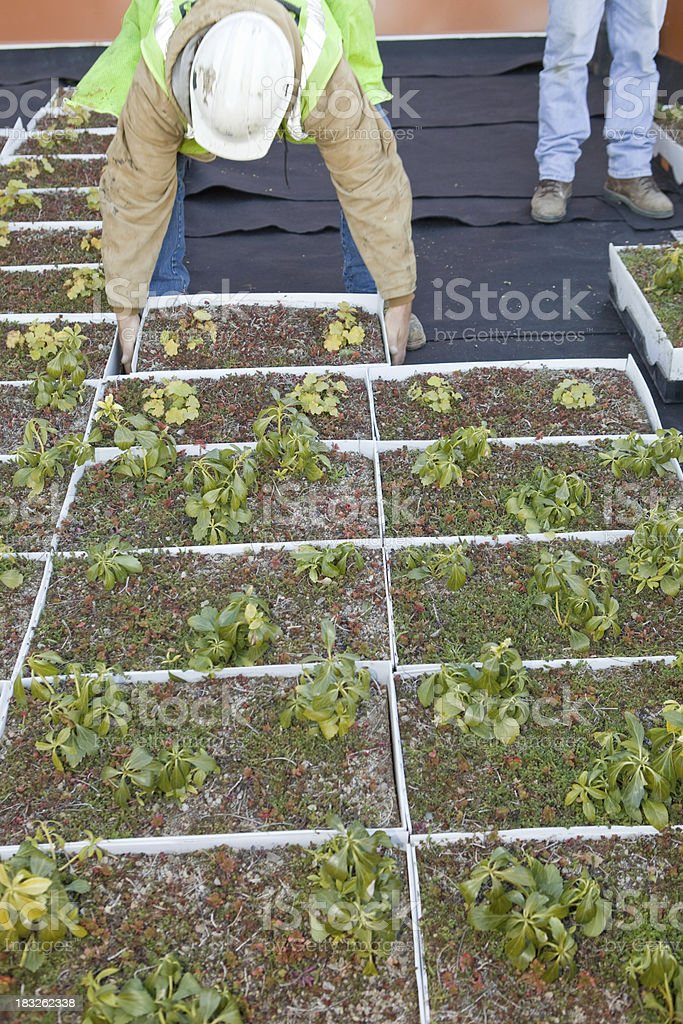 Worker Installing a Green Roof at Commercial Construction Site stock photo