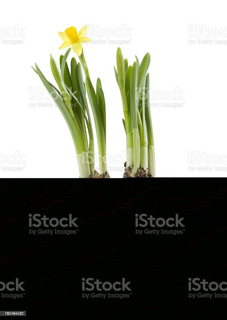 Worker stock photo