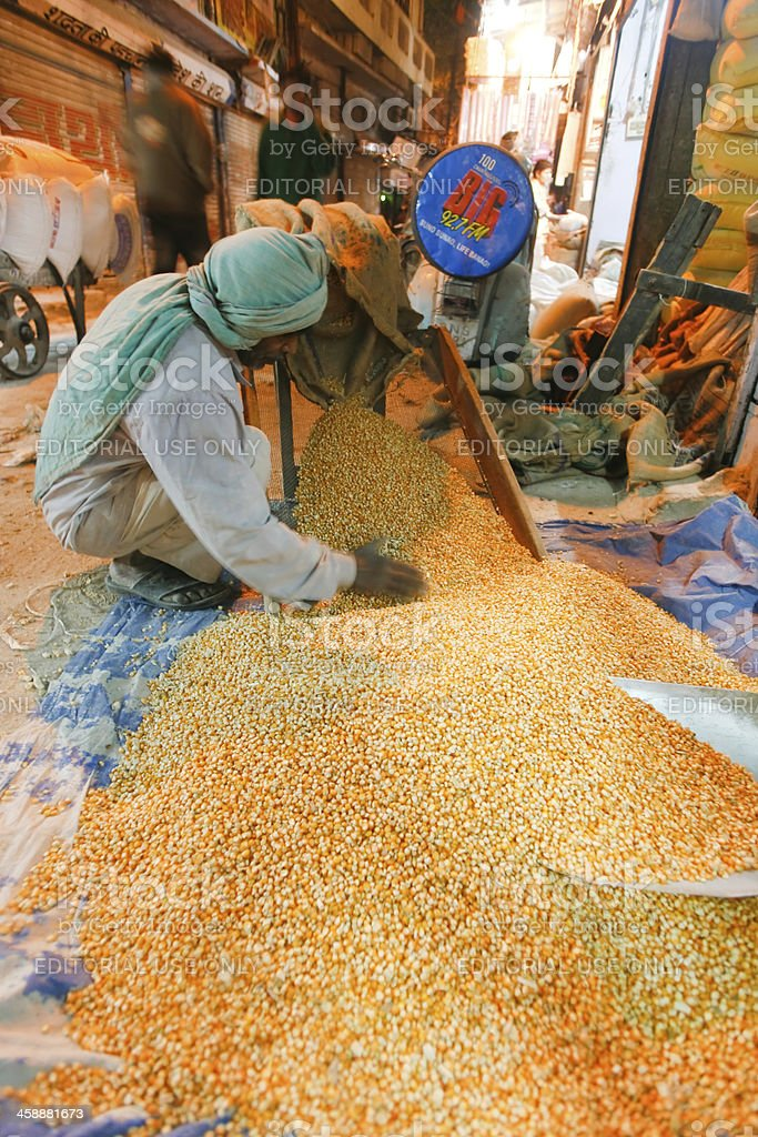 Worker pouring corn royalty-free stock photo